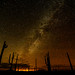 Milky Way over Organ Pipe Cactus National Monument