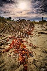 Ganivelle… - #01 (DENISDROUAULT) Tags: beach borderfx breizh bretagne brittany hdr jimages mer morbihan ocean océan paysage plage sea soleil sun surf vague vagues water wave waves