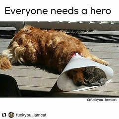 #Repost @dogwoofies ・・・ #Repost @fuckyou_iamcat with @repostapp ・・・ Doesn't matter who you are, you can always make a difference. (L3tsS4veAnima1s) Tags: ifttt instagram animal animals lover lovers welfare rights let lets save some help letssavesomeanimals saving