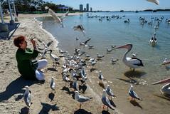 Getting Attention (Jocey K) Tags: sky people seagulls pelicans water birds buildings river sand labrador shadows australia queensland surfersparadise goldcoast triptoqueenslandbrisbane