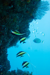 20150816-DSC_5928.jpg (d3_plus) Tags: sea sky fish beach japan scenery underwater diving snorkeling  shizuoka    apnea izu j4  waterproofcase    skindiving minamiizu       nikon1 hirizo  1030mm  nakagi 1  nikon1j4 1nikkorvr1030mmf3556pdzoom beachhirizo misakafishingport  1030mmpd nikonwpn3 wpn3