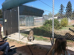 20150919_122456 (mjfmjfmjf) Tags: oregon zoo 2015 greatcatsworldpark