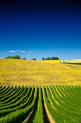 ...et de vin / 3 (Fabrice Le Coq) Tags: jaune vert bleu ciel paysage extérieur vigne fabricelecoq