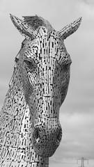 Myth made steel 05 (byronv2) Tags: blackandwhite bw sculpture horse water monochrome statue scotland canal blackwhite steel folklore mythology myth equine falkirk forthclydecanal kelpie andyscott thekelpies