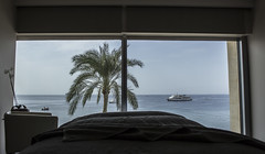 Palmera (Antonio Campoy Ederra) Tags: mar redsea jordan vacaciones aqaba jordania marrojo hotelkempinski