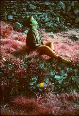 1990 uk 07 rose? (francois f swanepoel) Tags: uk rose yellow wales tulip infrared 1990 slidescans infraredfilm kodakektachromeinfrared rosekourie