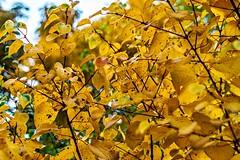 Unser Garten im Oktober-9 (joerg.stappen) Tags: pflanze unsergarten