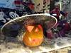 20151030_192703 (WiKiCitta.it) Tags: halloween bambini trickortreat milano ombre via piazza zucche maschere bovisa caramelle paura fantasmi tartini dergano cargobikes zona9 commercianti imbonati