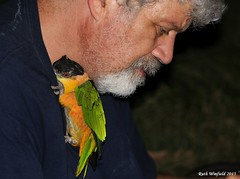 Cookie and Me_2015.09.21 (1 of 2) (Urutu_From_SW_PA) Tags: bird parrot petbird petbirds caique blackheadedcaique pionitesmelanocephala blackheadedparrot pionites blackcappedcaique