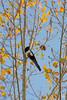 2015-11-01_Q8B4019 © Sylvain Collet.jpg (sylvain.collet) Tags: autumn france nature automne sur marne vairessurmarne vaires