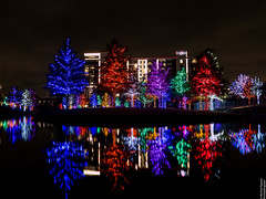 Vitruvian Lights 2015-10 (MikeyBNguyen) Tags: us texas unitedstates christmastree christmaslights christmastrees addison vitruvianpark vitruvianlights