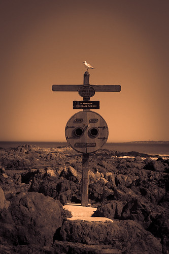 Bird sitting on Cross