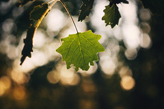 I miss you | Explored on 11.28.15 | Thank you all! (Pásztor András) Tags: light sunset summer sun macro tree green nature beauty forest lens photography leaf nikon hungary mood bokeh m42 manual leaflet russian calmness helios andras pasztor d5100