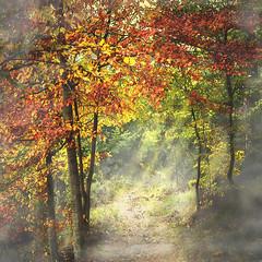 Moncayo (Inmacor) Tags: autumn light naturaleza fall hoja luz nature forest landscape hojas arbol arboles camino paisaje paseo bosque otoo octubre foret hayedo ltytr2 ltytr1 inmacor