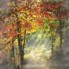 Moncayo (Inmacor) Tags: autumn light naturaleza fall hoja luz nature forest landscape hojas arbol arboles camino paisaje paseo bosque otoño octubre foret hayedo ltytr2 ltytr1 inmacor