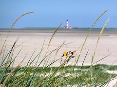 Westerhever (Travelling and more) Tags: lighthouse beach strand germany deutschland deu leuchtturm schleswigholstein ording sanktpeterording