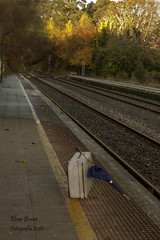 ADIÓS TREN, ME VOY CAMINANDO SOLA (Elena Bouza Pena) Tags: trenes vias elenabouza nikon maletas paraguas estacion