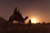 Desert Safari (Karunyaraj) Tags: pusharfair pushkar desert desertsafari thardesert deserted camel camelherder camelfair camelfair2016 sunset sun dusk goldentones goldenhour goldendust rider rajasthan india silhouettes nikond610 d610 nikon24120 cwc chennaiweekendclickers cwc561