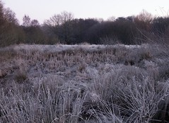 Winter Wonderland_ (Andy Cash) Tags: 2016 andycash fenton frost smithpool smithpoolpark unitedkindom cold winter frozen wildlife nature