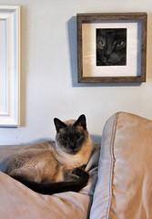 Ninja and Ninja  (explored) (Artist Victoria Watson) Tags: cat art catportrait drawing siamesecat colorpencildrawing feline felineart catart explored catdrawing prismadrawing animalart fauna pet