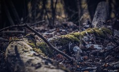 Extinct quiet beauty of the world .. (tferi666) Tags: nature nice best beautiful amazing sony ilce next alpha a6300 sonyflickraward sonyflickrawardgold 18105mm hungary magyar zemplénhegység ngc flickrsbest