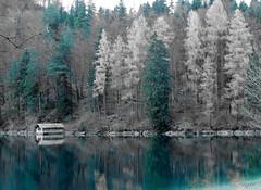 Quiet winter (FleurdeLotus28) Tags: bavaria quiet winter reflet reflection tree arbre water lake see miroir mirror branche house cabane calme srnit serenity nature landscape paysage allemagne alpes allgu germania germanie nikon