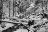 Bannwald · Protective Forest (Objektkontrast) Tags: badenwürttemberg schwäbischerwald welzheim bannwald protectiveforest strümpfelbachschlucht winter