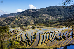 Colorful Steps (lycheng99) Tags: terrace terracefarming farming riceterraces reflections rice yuanyang yunnan china steps curves topography