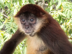 P8171124_LR (CharlieBro) Tags: 2016 centroamerica lagonicaragua lucy nicaragua agosto animal animale august barca boat lago lake lancha monkey natura nature scimmia summer wild
