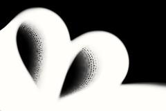 More than words (dunlendino14) Tags: inspiredbyasong macromondays nikond750 nikonmicro105mm