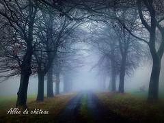 2017-01-08 allée du château(22)f (april-mo) Tags: fog brouillard mist misty foggy wood treesinfog winter bois secretwood alléeduchâteau trees arbres nature