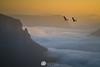 Black Cockatoos Govetts Leap (Gary Hayes) Tags: bluemountains golden light sunset sunrise sydney
