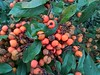 WP_20161226_10_51_13_Pro (vale 83) Tags: berries microsoft lumia 550 wpphoto wearejuxt flickrcolour macrodreams autofocus coloursplosion colourartaward beautifulexpression yourbestoftoday
