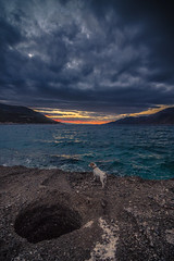 Dog at sunset (Vagelis Pikoulas) Tags: dog rock rocks sea seascape landscape clouds cloud cloudy sun sunset dramatic porto germeno europe greece