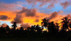 sunset, Maragogi (mountainbogy) Tags: maragogi alagoes brazil brasil brazilia colors tree palm atlanticocean ocean coast