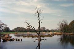 Naturschutzhof Swamp (02) (Hans Kerensky) Tags: camera 120 film canon kodak scanner 7 swamp 100 xl rf nettetal profoto plustek opticfilm naturschutzhof anywhitefieldtagbyflickrsspamtagbot