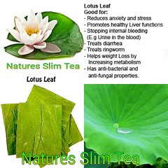 Lotus Leaf Tea (Natures SlimTea) Tags: naturalbeauty herbaltea weightloss oolong healthyeating puerh oolongtea puerhtea lotusleaf healthyliving clearskin smoothskin betterhealth slimmingtea beautifulskin goodskin eatingright betterfood healthylife greenteaextract healthybody naturalskin weightlosstea herbalweightloss lotusleaftea slimtea youngskin eatforhealth garciniacambogiaextract youthfullskin