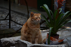 Grand Bazaar cat