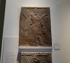 Stone relief sculpture of an Assyrian protective spirit  (ca. 860 B.C.) (heffelumpen9) Tags: sculpture relief britishmuseum assyria nimrud assyrianart ashurnasirpalii apkallu wingedgenie wingedgenius wingedgenii bucketandcone