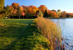 an afternoon walk (Elena Berd) Tags: park trees toronto fall centennial pond colours leafs