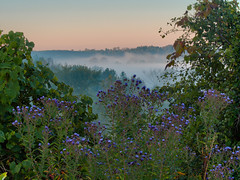 Asters and the Grand River Valley (virgil martin) Tags: panorama ontario canada fog landscape gimp grandriver asters elora wellingtoncounty grandrivervalley microsoftice oloneo olympusomdem5