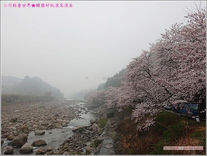 河東花開十里路 (24).JPG