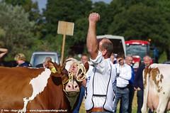IMGP5415-413 (hugomekersfotografie) Tags: delta hugo dieren crv koeien boerderij 2015 boeren veehouderij brownswiss roodbont veeteelt tractoren rundvee zwartbond rijkse streeknieuws hugomekersfotografie fokveedageibergen