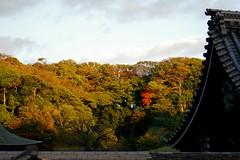 Autumn colours at 松岡山 東慶寺