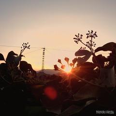 Torre de luz (Nando Verd) Tags: pez planta luz contraluz hojas atardecer ojo cable alicante amanecer cables cielo reflejo flare electricidad rama elda destello petrer h9 ramas eken