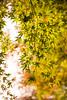 TOKUSHIMA DAYS - Kamiyama forest park (junog007) Tags: autumn japan leaf nikon shikoku tokushima autumnalleaves d800 2470mm kamiyama nanocrystalcoat