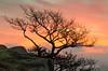 Burning bush! (In Explore 11 Dec 16) (andythomas390) Tags: sunrise dawn cloud orange nikon d7000 18200mm