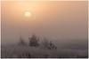 Mist (HP019842) (Hetwie) Tags: ijs nachtvorst natuur strabrechtseheide ochtend kou nature sunrise zonsopkomst rijp mist strabrecht winter heide ice heather frost frozen vorst lierop noordbrabant nederland