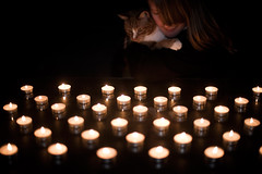 Day 321, Year 9. (evilibby) Tags: 365 3659 365days 365days9 libby barnabee cat gingercat light lights candle candles candlelight tealight tealights dark evening cuddle flame