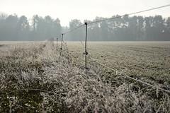 Covered with frost (heikecita) Tags: wiese zaun fence heiligensee berlin deutschland raureif frost meadow